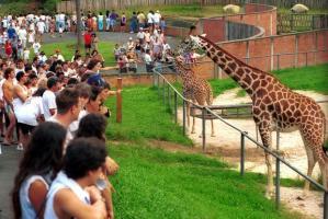 zoo_curitiba_2